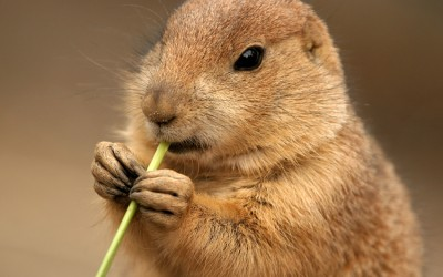 STRATEGIES ARE LIKE THE CADDYSHACK GOPHER